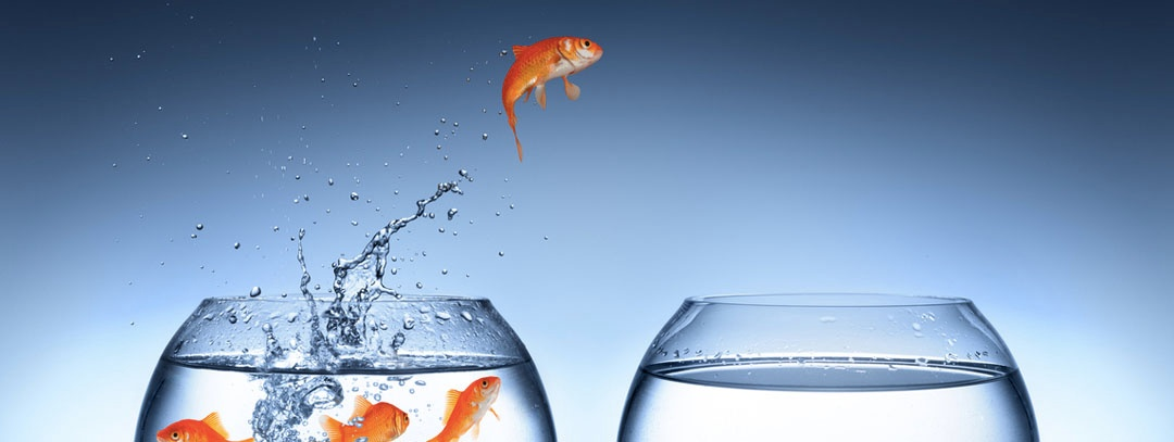 leap-fish.jpg